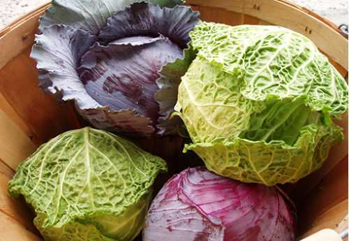 Bắp cải tím cho bữa ăn thêm màu sắc.