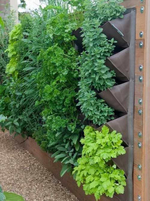 Vườn rau… dựng đứng, một cách trồng rau khá mới và sáng tạo, hơn nữa rất thích hợp cho những căn hộ không có đủ khoảng đất trống cho trồng trọt.