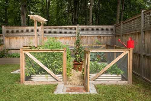 Hàng rào với màn lưới mỏng sẽ giúp bạn phần nào bảo vệ được rau trồng tốt hơn.
