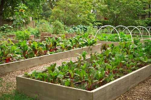 Những khung gỗ như thế này rất hữu ích trong việc giữ cho tổng thể vườn rau trông gọn mắt và hơn nữa là phân chia các loại rau hợp lý giúp công việc làm vườn của bạn thêm dễ kiểm soát.
