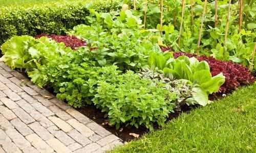 Tuy vậy, bạn cũng không cần đến hẳn một mảng đất lớn để trồng rau, tạo dựng khoảng vuông nho nhỏ ngay bên lối đi cũng là một gợi ý không tồi.