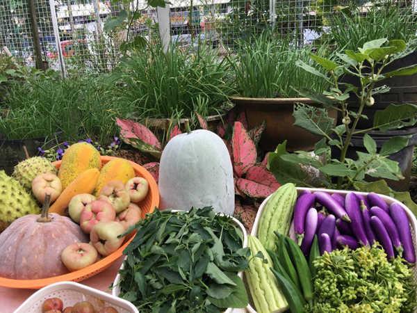 Sản vật vườn nhà thu hoạch trong một buổi sáng của chị Ly. Ảnh: Facebook.