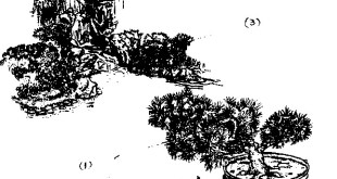 H 3. Thác nước xây dựng theo luật xa gần 1 Cây BonSai có cành lớn, lá nhỏ, đặt ở gần làm nổi bật cảnh gần lên 2 Cây BonSai có kết cấu lá nhỏ, mịn được cắt tỉa để tạo các khoảng trống quanh thân, đặt bên thác dường như lớn hơn thực tế 3. Ụ, gò, đống đất, đá tạo thành đồi núi thấp nhỏ cùng với các cây con trống lùm, bụi ở cảnh giữa làm không gian tối lại, mờ mịt