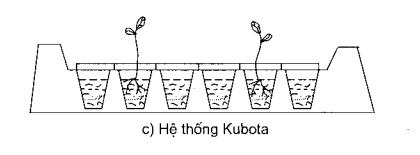 Hệ thống Kubota