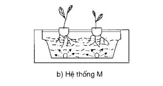 Hệ thống M