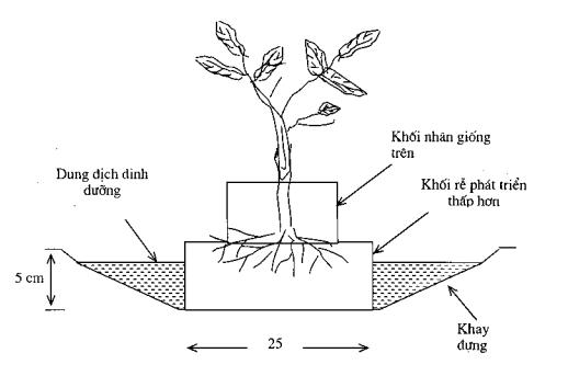 Hình 2.9. Hệ thống tưới nước ngầm cho cây trồng trong khối chất xơ