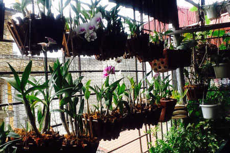 Một góc vườn lan đủ các loại được treo trên dàn