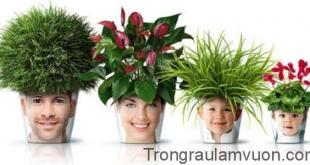 Bố trí hoa cảnh trong nhà đúng cách sẽ ảnh hưởng tích cực đến thái độ sống của các thành viên trong gia đình