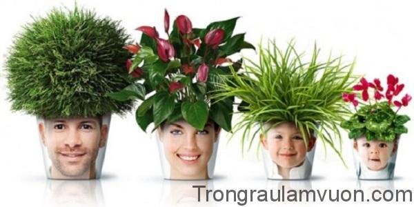 Bố trí hoa cảnh hợp phong thủy trong nhà đúng cách sẽ ảnh hưởng tích cực đến thái độ sống của các thành viên trong gia đình