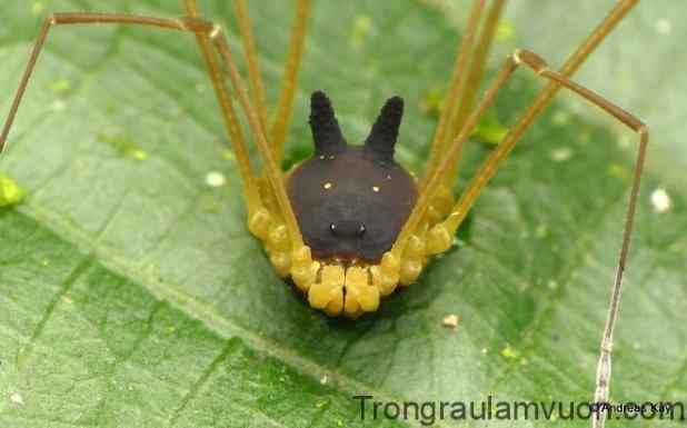 Kỳ lạ loài nhện nhìn y hệt đầu con chó khiến internet vừa sợ vừa buồn cười - Ảnh 3.