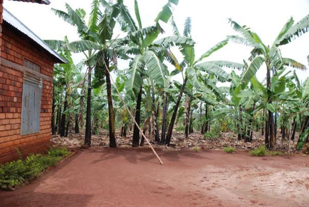 Palmbomen naast het stenen huisje