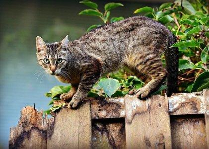 Gejala dan Cara Mengobati Scabies Kucing