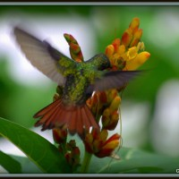 My Day in Wonderland/Costa Rica