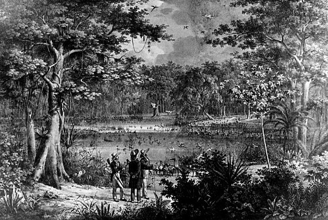 Nineteenth Century naturalists overwhelmed by the abundance of life in a tropical rainforest. From J.B.. von Spix and C.F. P. Martius, 1817-1820.