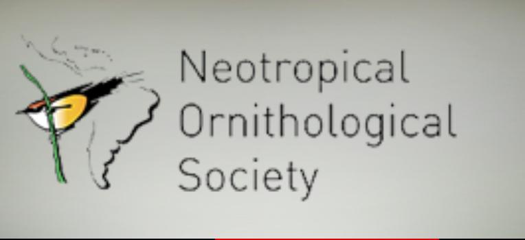 neotropical ornithological society