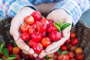 Acerola - Barbados Cherry - A hand of a man full of acerola