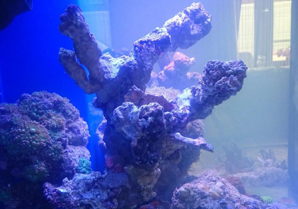artificial rock in the aquarium