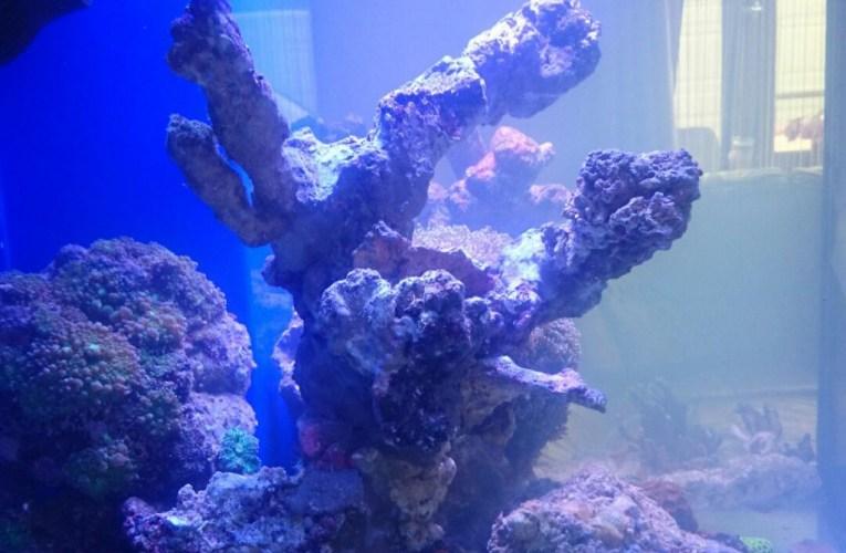 Artificial rock in a marine aquarium – advantages and disadvantages