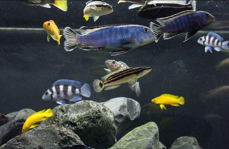 Bufory pH w akwarium