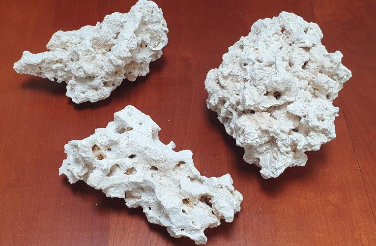 Ocena jakości skały do akwarium morskiego