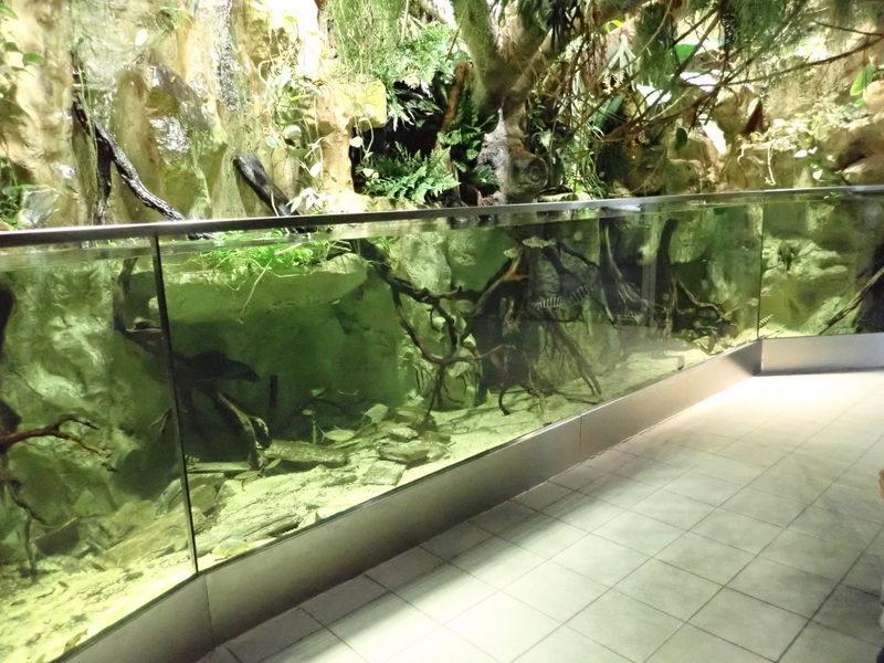 Akwarium wystawowe zzimiojadami