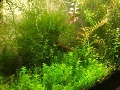 Albert Figueroa - The shrimp jungle
