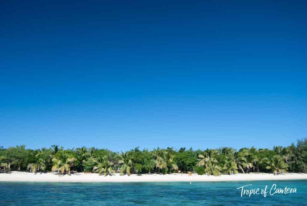 Row of palm trees on a sandy beach in Fiji