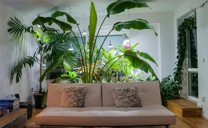 Tropical plants growing indoors