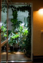 Hoya carmosa over the balcony door. View into the living room.
