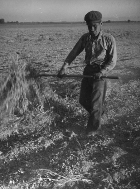 San Fernando Valley lima bean worker, ca. 1937 | Herman J. Schultheis Collection, Los Angeles Public Library
