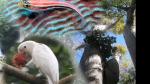 Video: Evolutionary Biology: Where Do We Go Now?