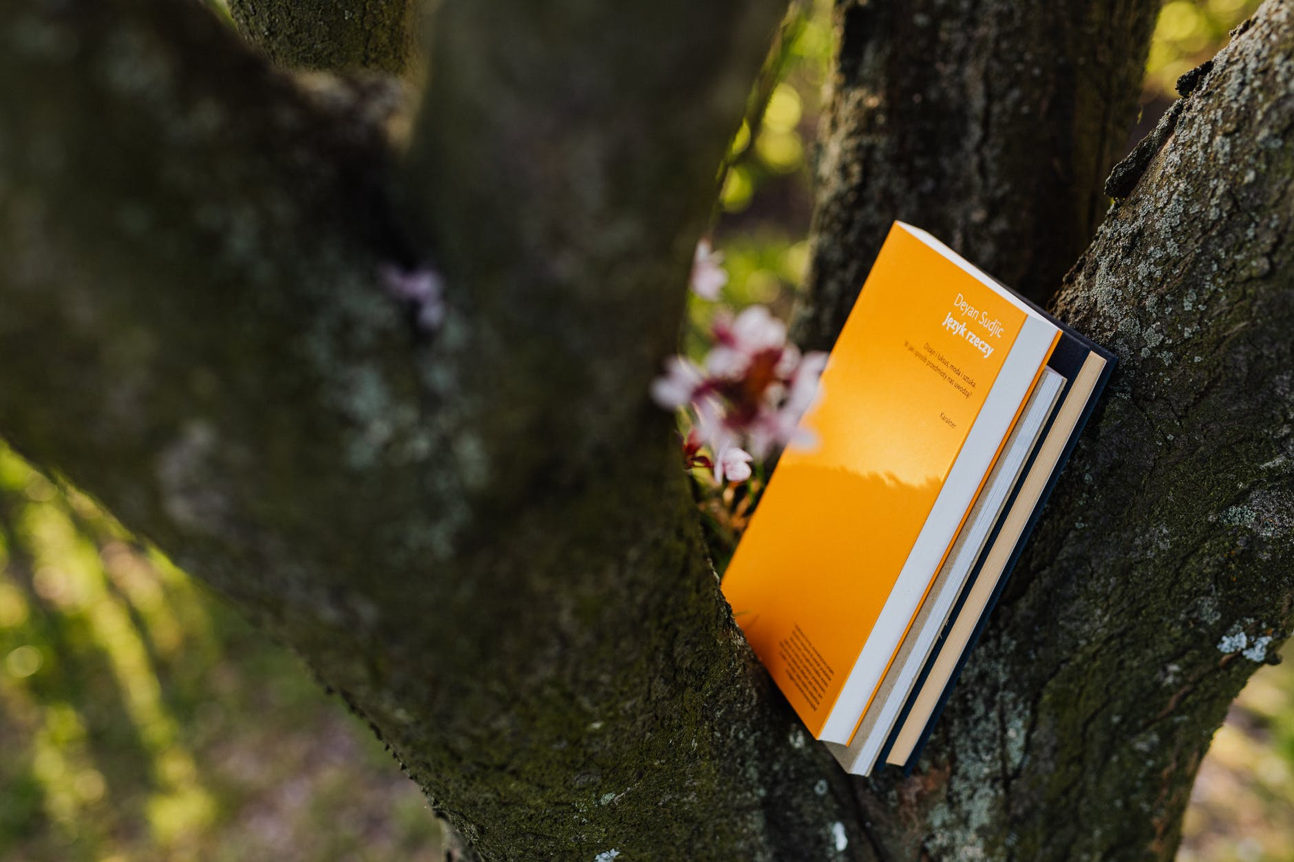 books in tree crotch on sunny spring day