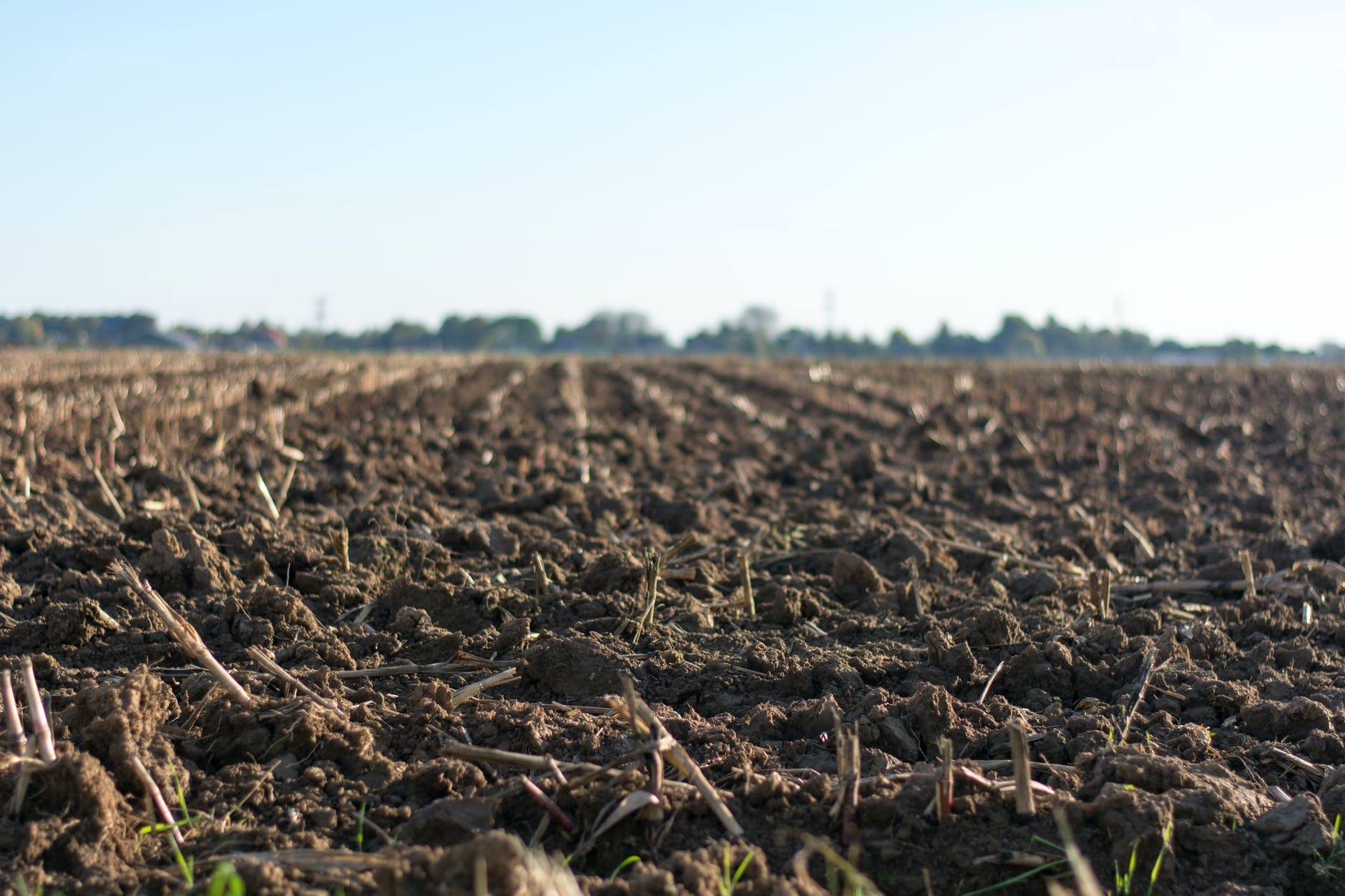 eye level photo of cultivated land