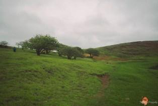 Wyspa Wielkanocna