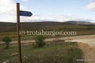 CARTEL INDICADOR DEL CAMINO DE SANTIAGO CERCA DE CIRAUQUI