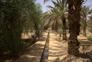 PALMERAS EN HASSIL BID