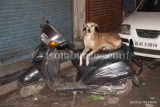 PERRO MOTORISTA EN MAIN BAZAR, DELHI