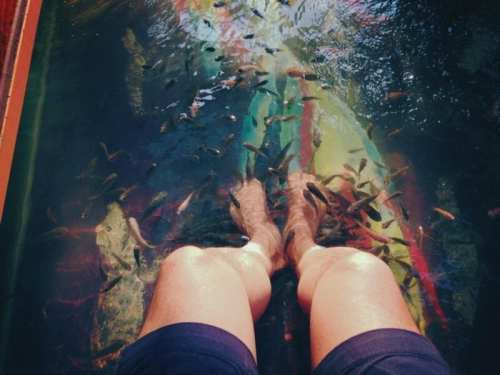 fish pedicure siem reap cambodia