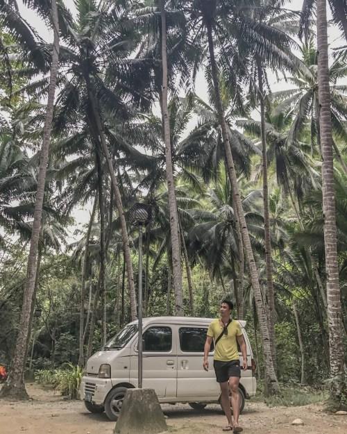 palm trees in cebu philippines