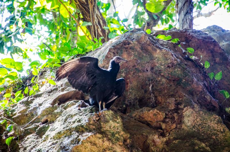 vautour cenote zaci