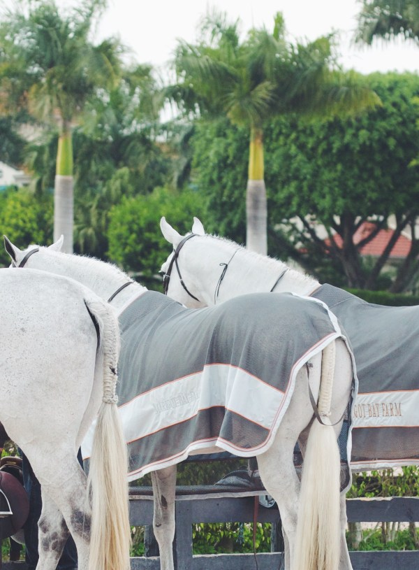Small Fish, Big Ocean: An Irrelevant Girl's Take On The Equestrian Lifestyle