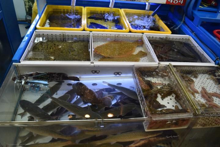 Busan fish market 015