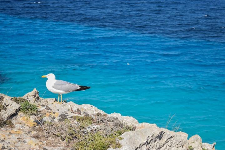 4 Days Week-End West Sicily 394