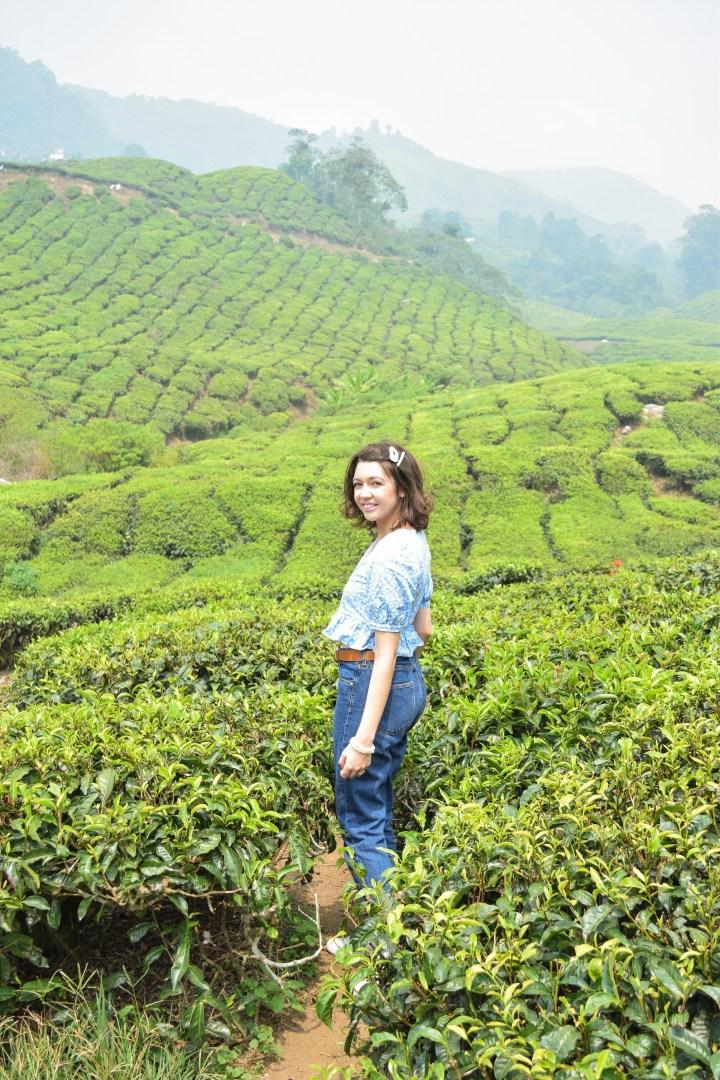 #Malaysia Day 8 – The  Boh tea centre – Cameron Highlands – September 19