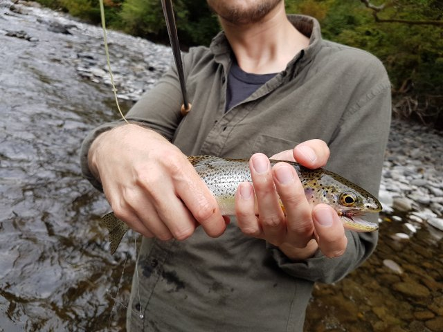 Calawah River, WA Cutthroat Trout