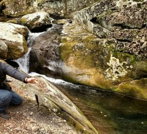 fly fishing in shenandoah wild brook trout