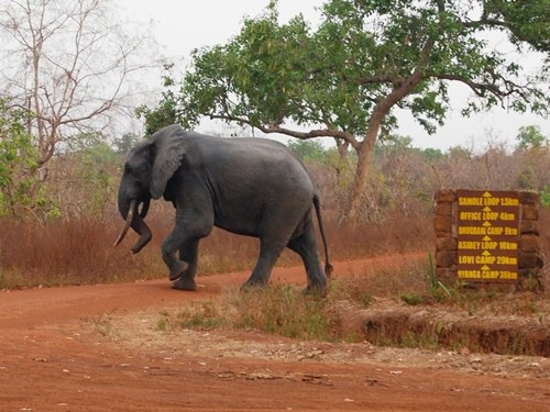 20130222ElephantLeaving