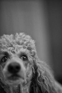 Poodle, la falla informatica che affligge le vecchie versioni di SSL