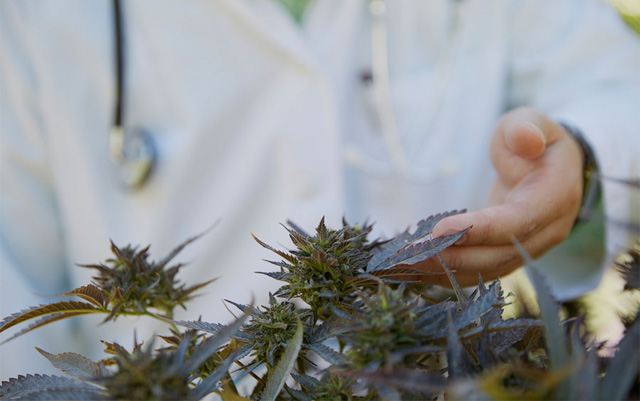 Members of Congress Urge DEA to Speed Up Approval Process for Medical Cannabis Research Applications