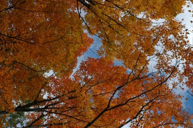 Fall_colors_Huntsville_2004-10-1167